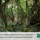 Jungle Regnskoven ZOO 01