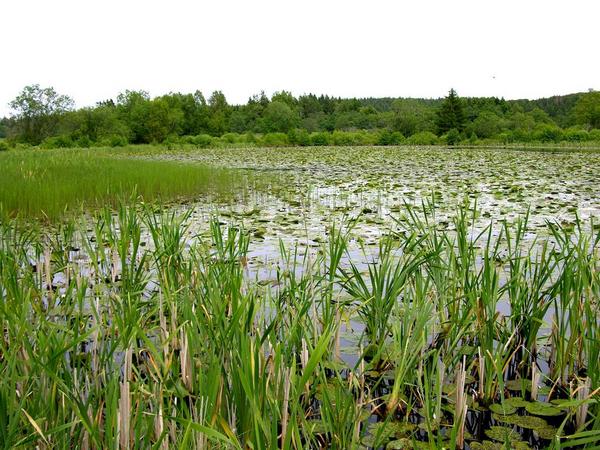 Søer - undervisningsmateriale til biologi