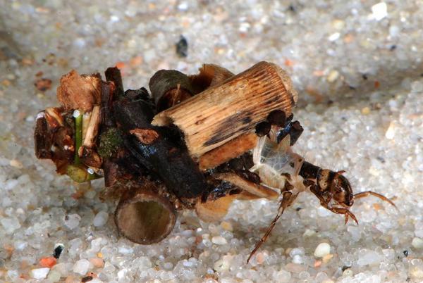 Insekters livscyklus