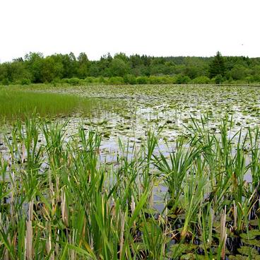 Søen som økosystem