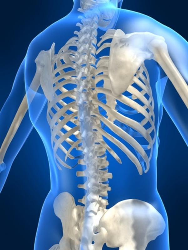 Skelettet - undervisningsmateriale til biologi