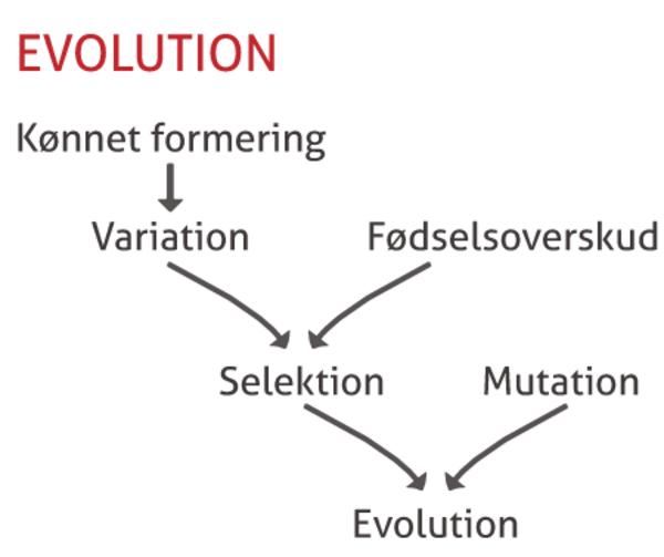 Evolution - undervisningsmateriale til biologi