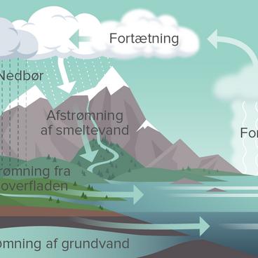 Vandets kredsløb i de levende organismer
