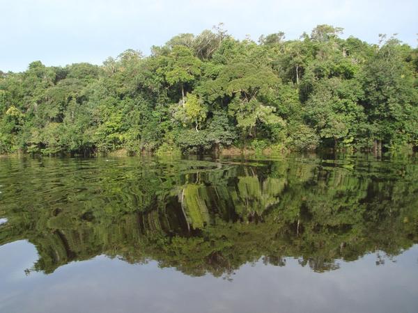 Tropisk regnskov