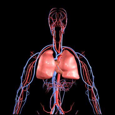 Kroppen – fra hvile til aktivitet