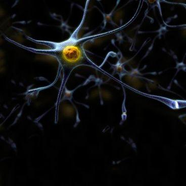 Nervecellen