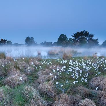 Abiotiske forhold i søer og moser