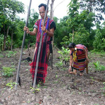 Landbrug i regnskoven