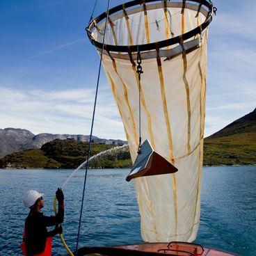 Fiskeri i Grønland