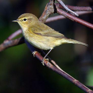 Stand- og trækfugle
