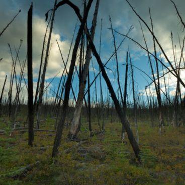 Skovenes rolle i den globale opvarmning