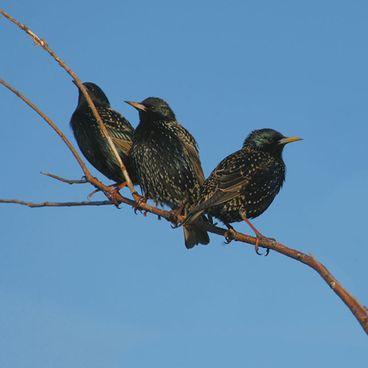 Klimaændringer påvirker fuglene