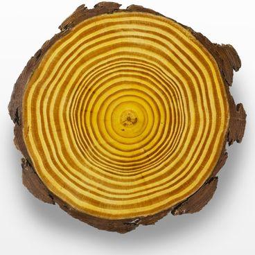 Træers vækst