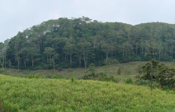 En kop kaffe med biodiversitet