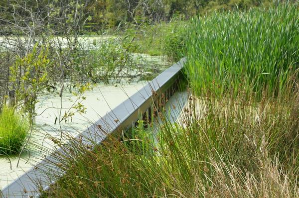 Billede til artiklen Lille Vildmose  Naturbeskyttelse  Ib Dyhr