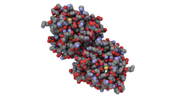 proteinmolekyle