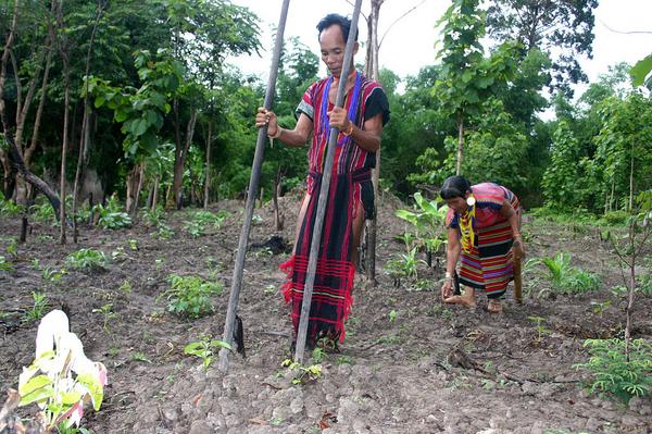 Brao Couple Planting Food